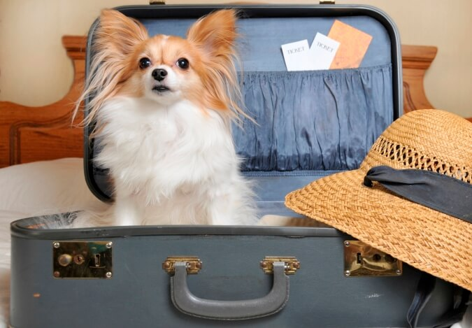 Собака в чемодане