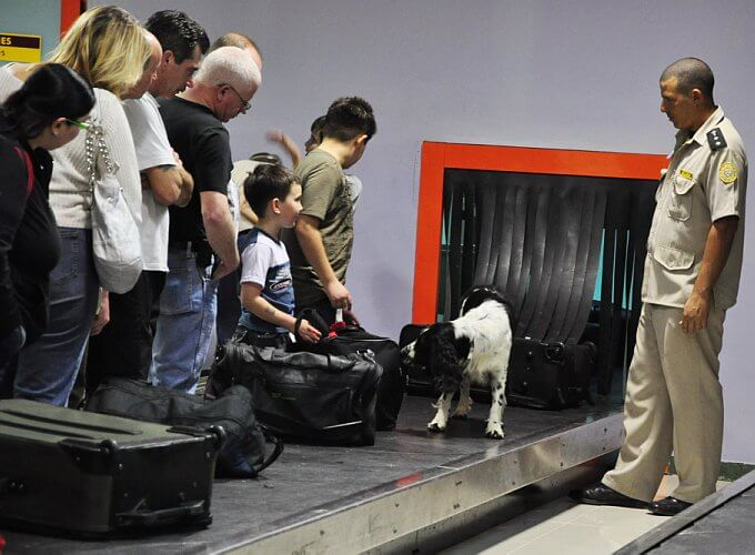 Собака на ленте для багажа