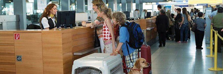 Требования к перевозке животных в авиакомпании Аэрофлот