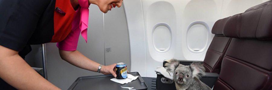 Как перевезти животное самолетом Уральских Авиалиний